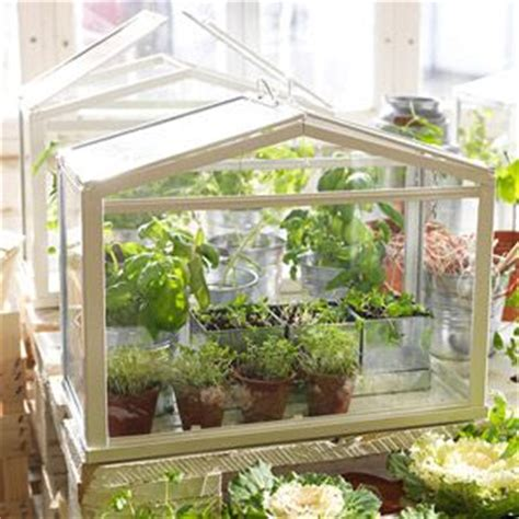best 25 indoor greenhouse ideas only on