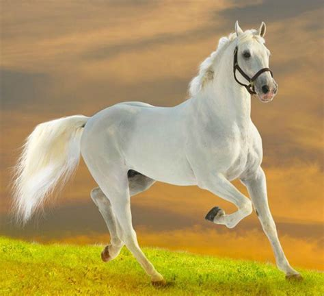 animals horse domestic horses animal cute hd run funny most hdwallpapers square cat