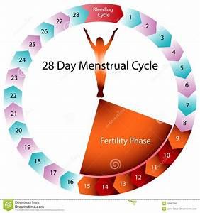 Menstrual Cycle Fertility Chart Stock Vector