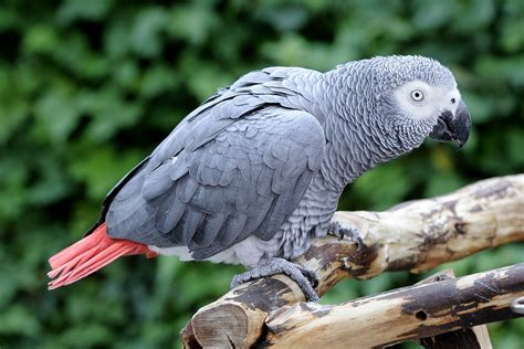 Types of Wild and Exotic Pets The Buzz Land