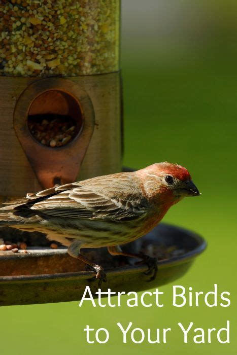 how to attract birds to your yard video tutorial your
