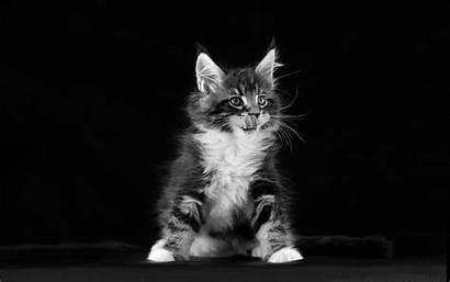 Desktop Kitten Wallpapers Wallpapers13 Resolution