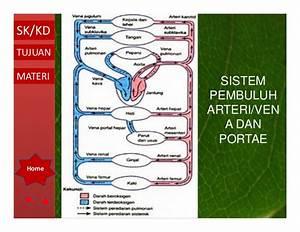 Sistem Peredaran Darah Oleh Ismail