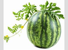Go into growing melons in Maine knowing they're needy