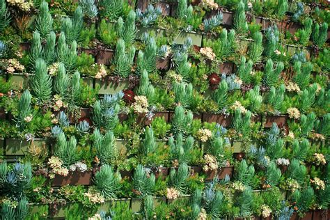 How To Plant A Vertical Succulent Garden by Succulent Plants In Vertical Garden Livewall Green Wall