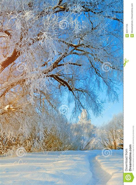 Winter Wonderland Scene With Snowy Forest Nature Forest