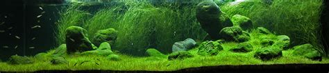Amano Aquascaping by Iguwami Aquarium The Simple Aquascape Aquariuminfo Org