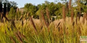 Quoi Planter En Automne : 5348 best le jardin se partage images on pinterest ~ Melissatoandfro.com Idées de Décoration