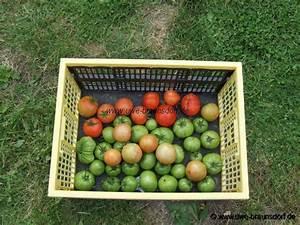 Grüne Tomaten Nachreifen : gartentagebuch 2007 ~ Lizthompson.info Haus und Dekorationen