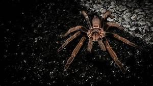 Spider [5] wallpaper