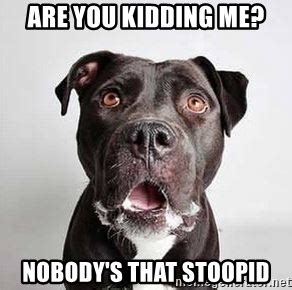 You Kidding Me Meme - are you kidding me nobody s that stoopid can t believe it dog meme generator