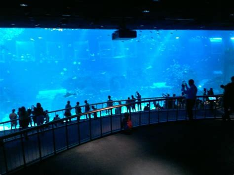 sea aquarium prices s e a aquarium picture of s e a aquarium sentosa island tripadvisor