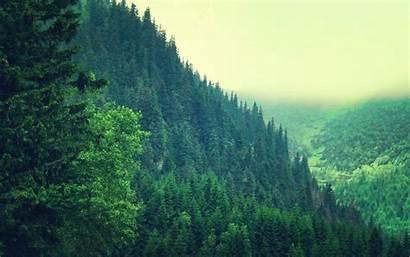 Forest Pc Wallpapers Backgrounds Pine Pixelstalk