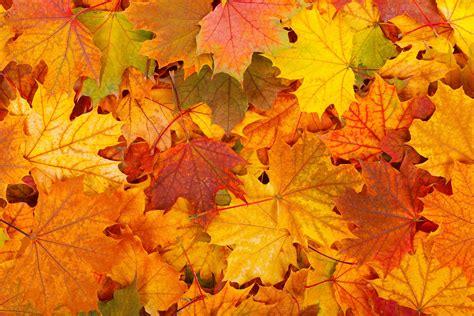 Orange Leaf Wallpaper by Free Background Photo Sharing Site