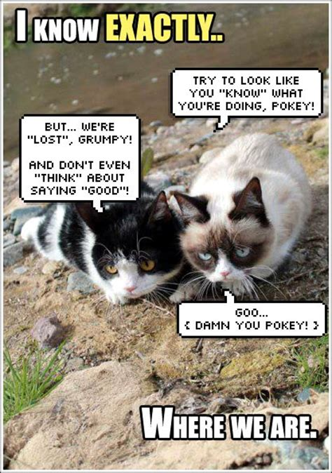 Tardar Sauce Meme - 1000 images about grumpy cat on pinterest grumpy cat grumpy cat meme and grumpy cat quotes