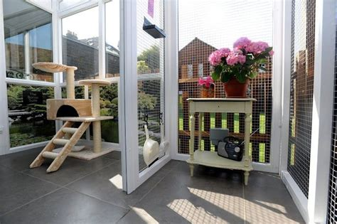 longcroft luxury cat hotel cattery  winchmore hill