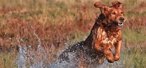 water dog born  hunt