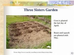 Three Sisters Garden Layout