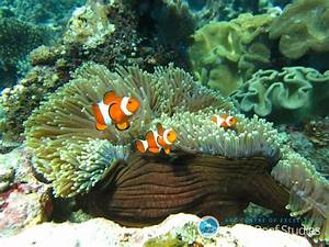 Coral Reef Fish Are More Resilient Than We Thought, Study ...