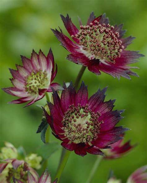 summer flowering perennials for shade easy summer flowering shade plants