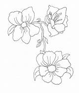 Tattoo Flower Lines Drawing Lizzie Mcguire Deviantart Zephyr Blossom Cherry Branch February Animated Clip Coloring Library Clipart sketch template