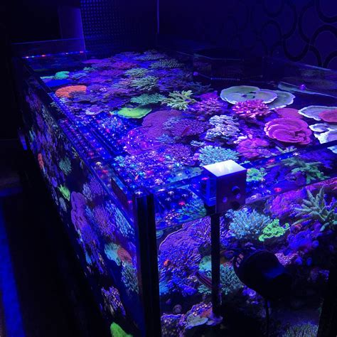 Led Aquarium Moonlight Night View •aquarium Led Lighting