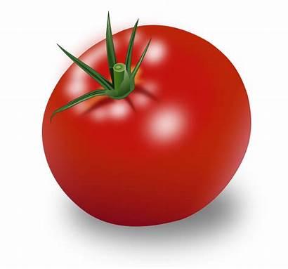 Tomate Publicdomainfiles Domain Clip Copyright Restrictions Tomato