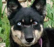 Husky Zu Verkaufen : husky hunde kaufen verkaufen auf ~ Orissabook.com Haus und Dekorationen