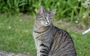 Katze Im Garten Begraben : katzen im garten 28 images katzen artgerecht vom ~ Lizthompson.info Haus und Dekorationen