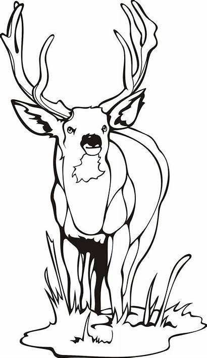 Deer Template Templates Craft Animal