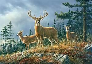 Wild forest animals Deer wall mural wallpapers
