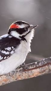 Wallpaper bird, snow, winter, plumage, white, Animals #719  Bird