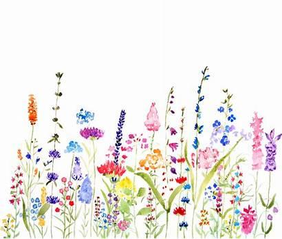 Watercolor Wildflower Colorful Flower Flowers Fields Painting