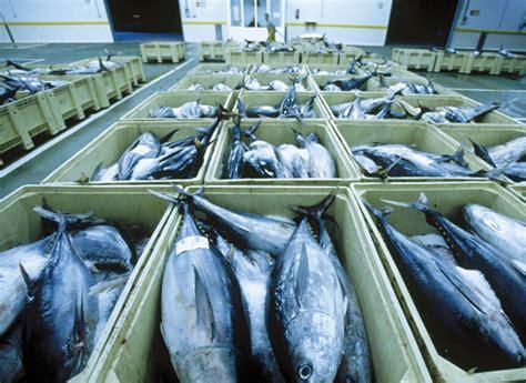 mercury fish tuna eating magazine low cro consumerreports fishes