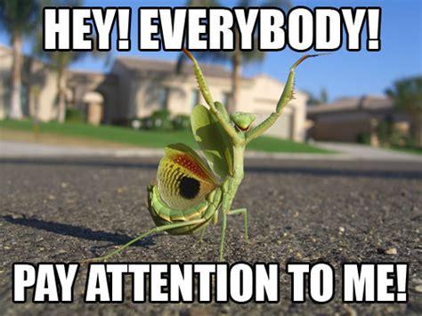 Attention Meme - image 347135 attention whore know your meme