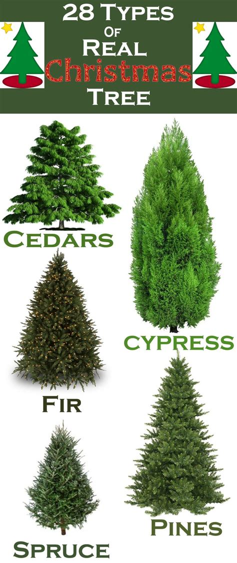 types of christmas trees and their advantages best 10 real christmas tree ideas on pinterest real xmas trees xmas ideas and kids christmas
