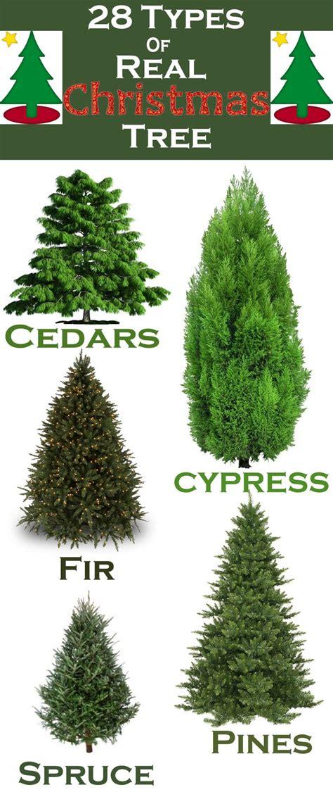 best 10 real christmas tree ideas on pinterest real