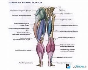 Как похудеть в ногах быстро отзывы