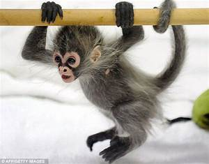 The Cutest Baby Monkey I've Ever Seen (5 pics) - Izismile.com