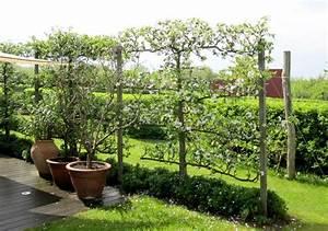 Sichtschutz Mit Pflanzen : garten pflanzen sichtschutz die besten sichtschutz ~ Michelbontemps.com Haus und Dekorationen