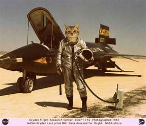 NASA-cat-test-pilots disturbing | catz | Pinterest