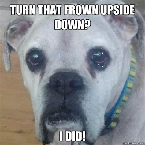 Frowning Dog Meme - frowning dog meme 28 images 25 best memes about anime dogs and grumpy cat anime bulldog