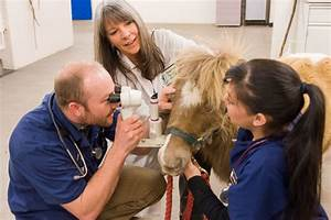 Equine Veterinarian: Education and Career Information