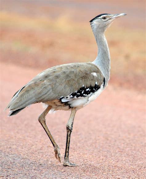 bird photographs september 2010