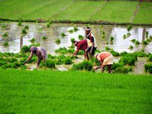 Income of Uttar Pradesh farmers are among the lowest in ...