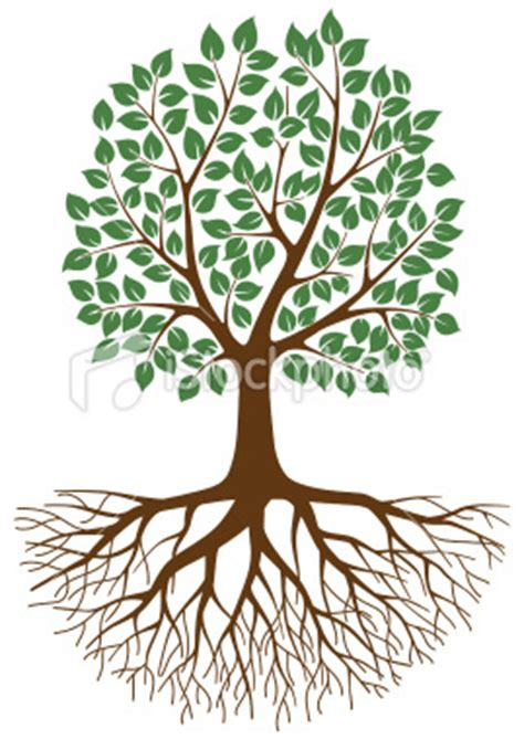 family tree with roots clipart the family tree mole st nicolas