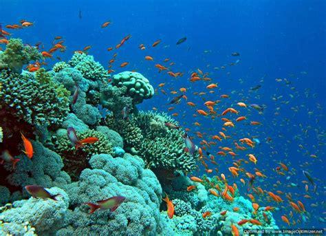 snorkeling trip in hurghada snorkeling in hurghada