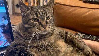 Meme Coronavirus Cat Memes Lockdown Corona Funniest