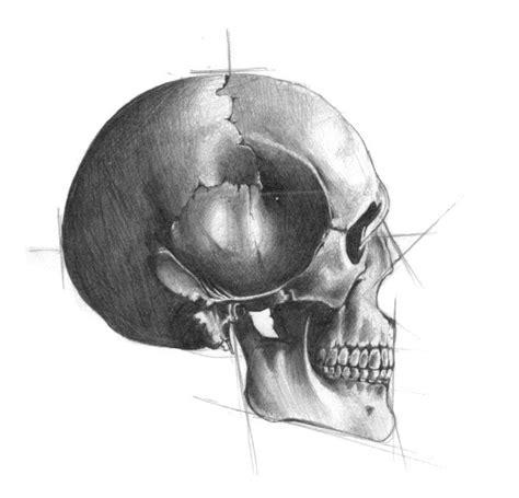 Skull Sketch Ashdesigns Drawing Pinterest