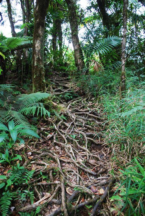 twisted path  compasslogicstock  deviantart